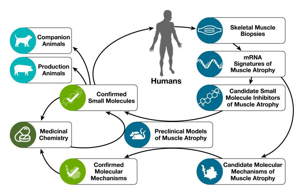 Emmyon Medical Platform Diagram